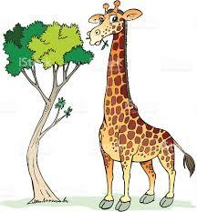 giraffe stock vector art 165646438 istock