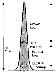 farm forest line standing tree volume