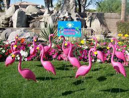 pink flamingo lawn ornaments pink flamingos ancaster rental centre in hamilton burlington