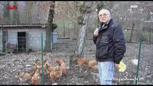 animali da cortile in centro abitato galline capre e altri animali a vergato e dintorni vergato news 24