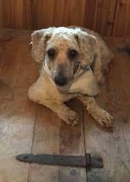Benson Dog Meme - florida pointer rescue posts facebook