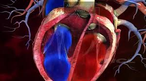 Heart Anatomy Youtube 3d Animation Of Working Of Heart Youtube Video Dailymotion