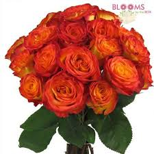 yellow roses with tips circus yellow bi color yellow and