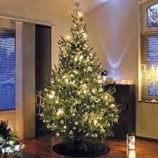 cheap trees for sale online buy trees uk van meuwen