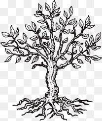 sketch tree png images vectors and psd files free download on