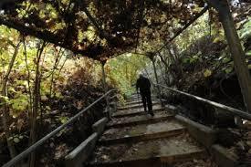 Ucr Botanical Gardens Ucr Today Twilight Tours Of Botanic Gardens Offered