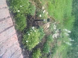 advice for low maintenance garden gardening forum