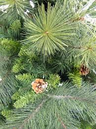 siberian cedar pine christmas tree 1 83m christmas trees the