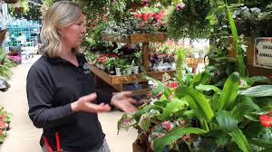 unusual plants under the pergola youtube