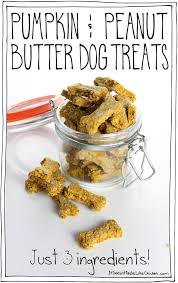 recipe for dog treats pumpkin peanut butter dog treats just 3 ingredients it doesn