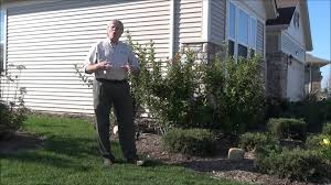 mosquito control tips expert lawn u0026 yard care advice youtube