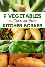 Vegetables You Can Regrow by 9 Vegetables You Can Grow From Kitchen Scraps Pretty Opinionated