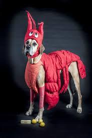 Dog Halloween Costumes 14 Dog Halloween Costumes 2014