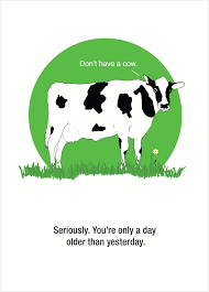 cow greeting cards birthday inspiration paradise