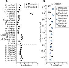 convergent evolution of mechanically optimal locomotion in aquatic