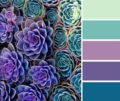 purple and turquoise color palette succulents color palette
