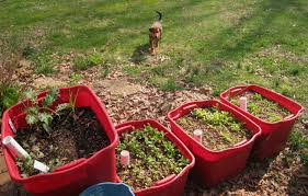 vegetable garden for small spaces gardening tips for small spaces vegetable growing in containers