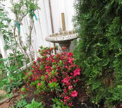 redbud urban hum gardening