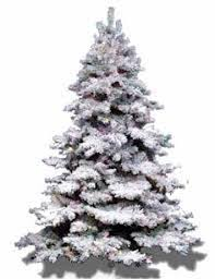 trees with snow kyprisnews