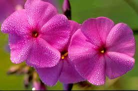flowering native plants kentucky native plant and wildlife november 2013