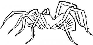 Spider Color Pages Spider Web Coloring Page Vitlt Com by Spider Color Pages