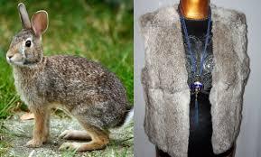 vintage rabbit how to identify vintage mink fox rabbit beaver raccoon furs
