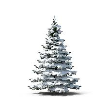 related evergreen tree object images available for png
