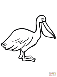pelican seabird coloring page free printable coloring pages