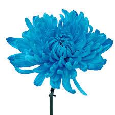 blue flower electric blue cremon farm fresh exports