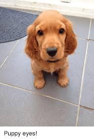 Puppy Eyes Meme - puppy eyes meme on me me