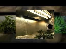 cfl lights for growing weed amazing cfl grow lights how to flower cannabis