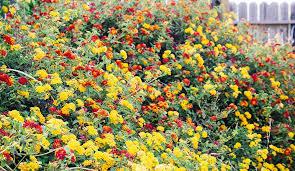heat loving plants heat tolerant plants that resist the sun and heat
