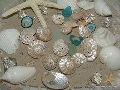 Seashell Centerpieces For Weddings by Beach Chic Sea Shell Place Card Holders For Your Beach Wedding Or