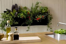 Kitchen Herb Garden Design 21 Kitchen Herb Garden Ideas Fit For Every Space Tastymatters Com