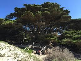 unique trees picture of pfeiffer big sur tripadvisor