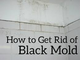 how to get rid of black mold the easy and cheap way dengarden