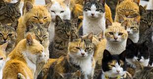 cat island aoshima japanese island also known as cat island here is why