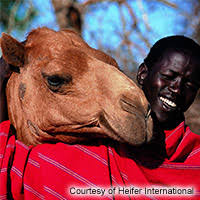 heifer international living gifts heifer international umcor