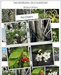 montessori tree printable tree identification cards set 3 printable montessori botany