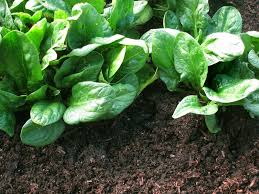 Vegetable Garden Soil Mix by Planting Mix A Good Soil Supplement Not Replacement Sfgate