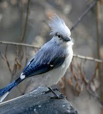 unusual birds feederwatch