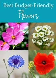 12 Best Annual Flowers For by Pink Flowering Trees Pink Flowering Trees Flowering Trees And