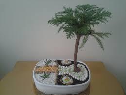 does norfork island pine make good bonsai subject