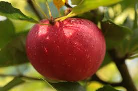 color measurement in agriculture improves apple fruit red coloring