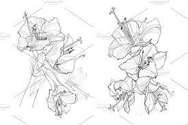 hibiscus flower pencil drawing graphics creative market