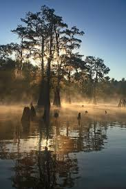 Louisiana scenery images 15 best beautiful scenery images cypress swamp jpg