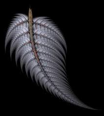 36 best silver fern appreciating new zealand imagery images on