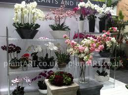 Artificial Orchids Plantart Artistic Artificial Floral Plant Flower Displays