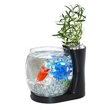 Office Desk Aquarium Betta Fish Bowls All Things Betta Fish In One Place