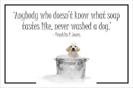 sayings for and groom dog quotes sayings